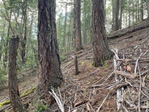 Unit 50 Bear Country Timber Sale