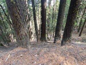 Unit 197 Bear Country Timber Sale